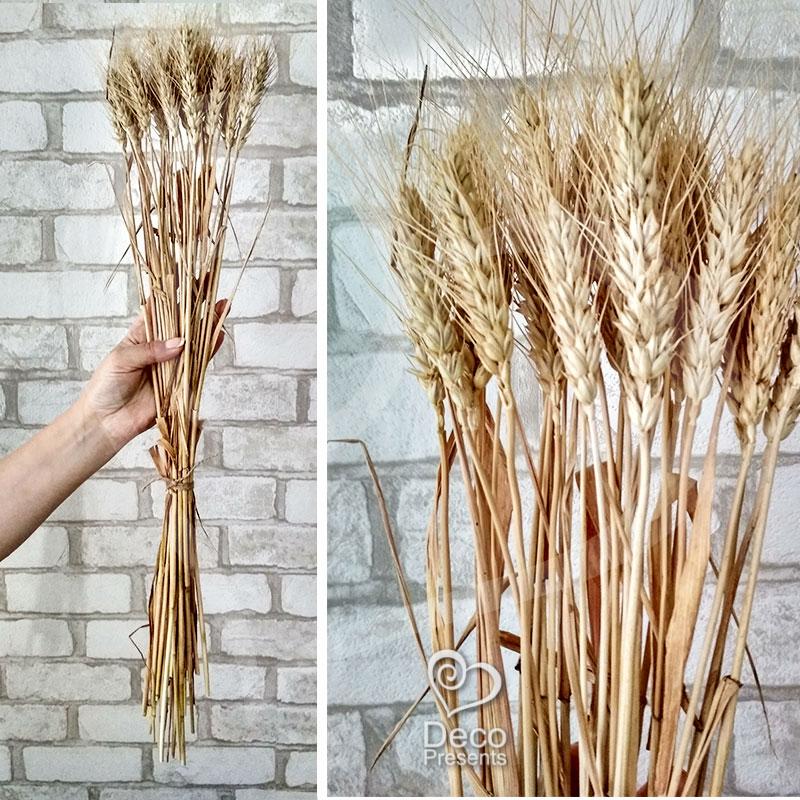 Купить оптом сухоцветы доставка цветов пенза флоренция отзывы